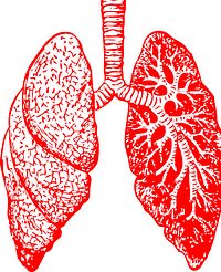 lungs-297492_640
